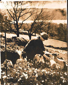 A man surrounded by lambs and a dog.