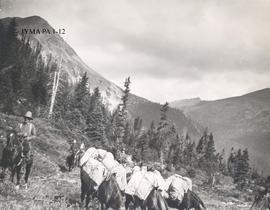 Group with horses on summer trail at head of Snaring River, Jasper National Park.