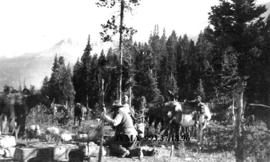 Setting up camp, Camp Waterfowl, Banff National Park, Alberta.