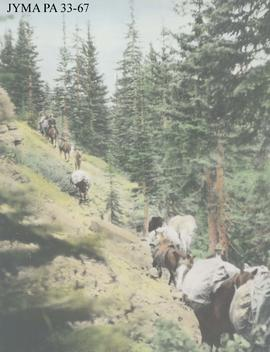 A pack train on the Bow Trail.