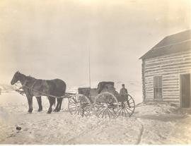 Horses hitched to a cart in winter, Millarville, AB.