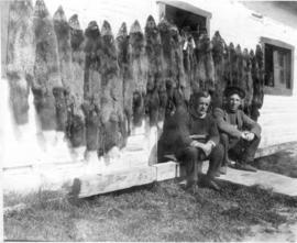 """A few silver Foxes. Taken at Fort Good Hope."""