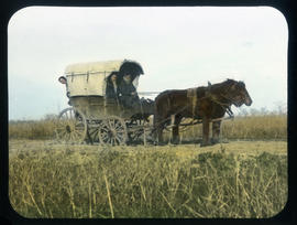 [Horses pulling covered wagon]