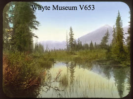 Near Hector Lake, Bow Valley 1910 / Mary M. Vaux