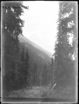 Sir Donald from clearing just above Glacier House, Glacier trip 1898 (No.78). 8/27/98