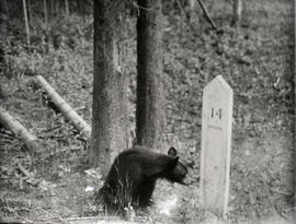 [Bear cub beside mileage marker]