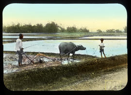 [Man and boy plowing field with Water Buffalo]